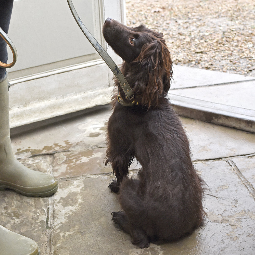Sophie Allport Pet Leads and Collars