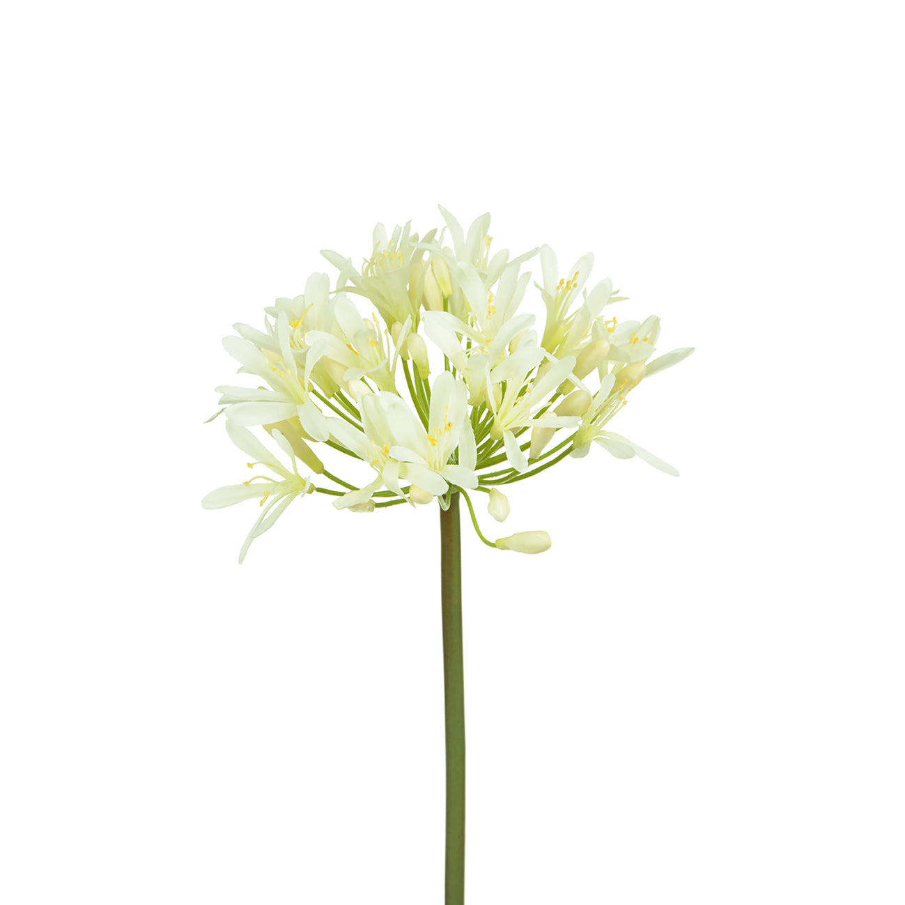Faux White Agapanthus by Sophie Allport