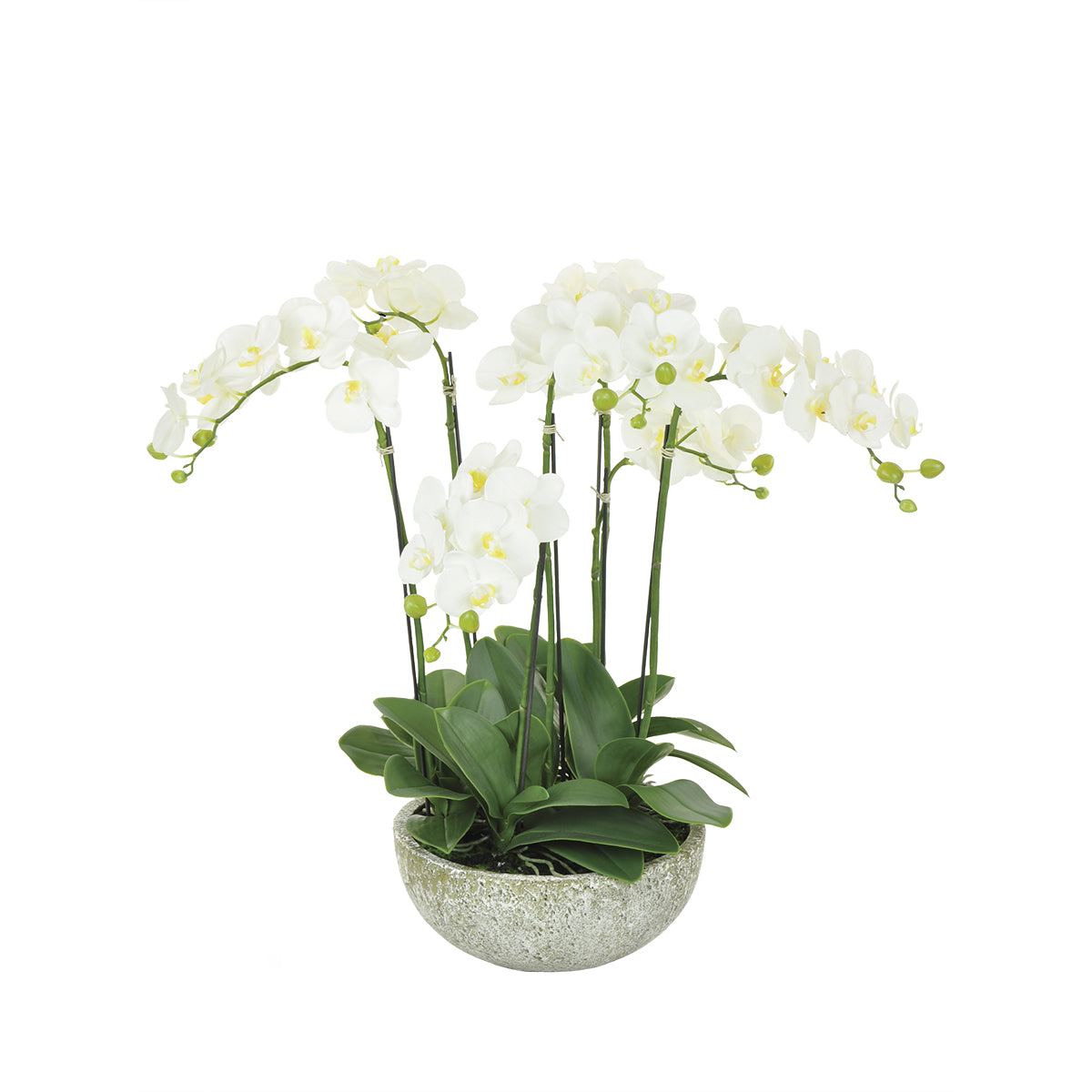 Medium Potted Orchid Stone by Sophie Allport