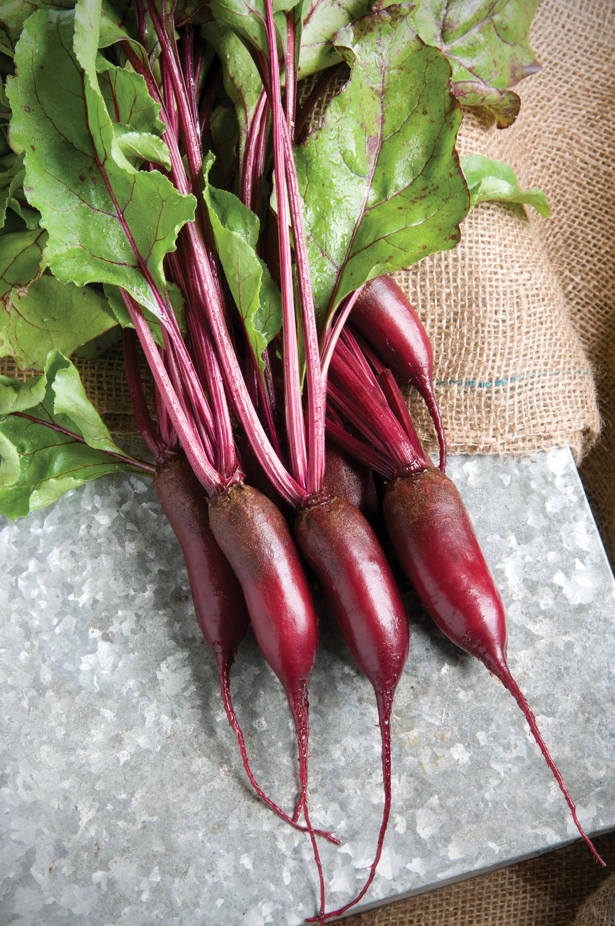 Cylindra Beet Root