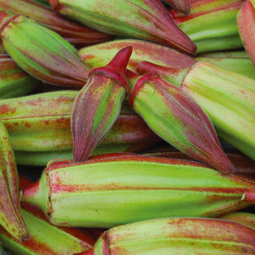 Okra, Hill Country Red Seeds