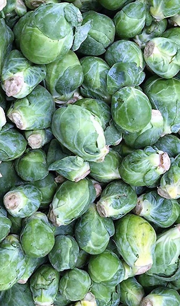 Long Island Improved Heirloom Brussel Sprouts Seeds