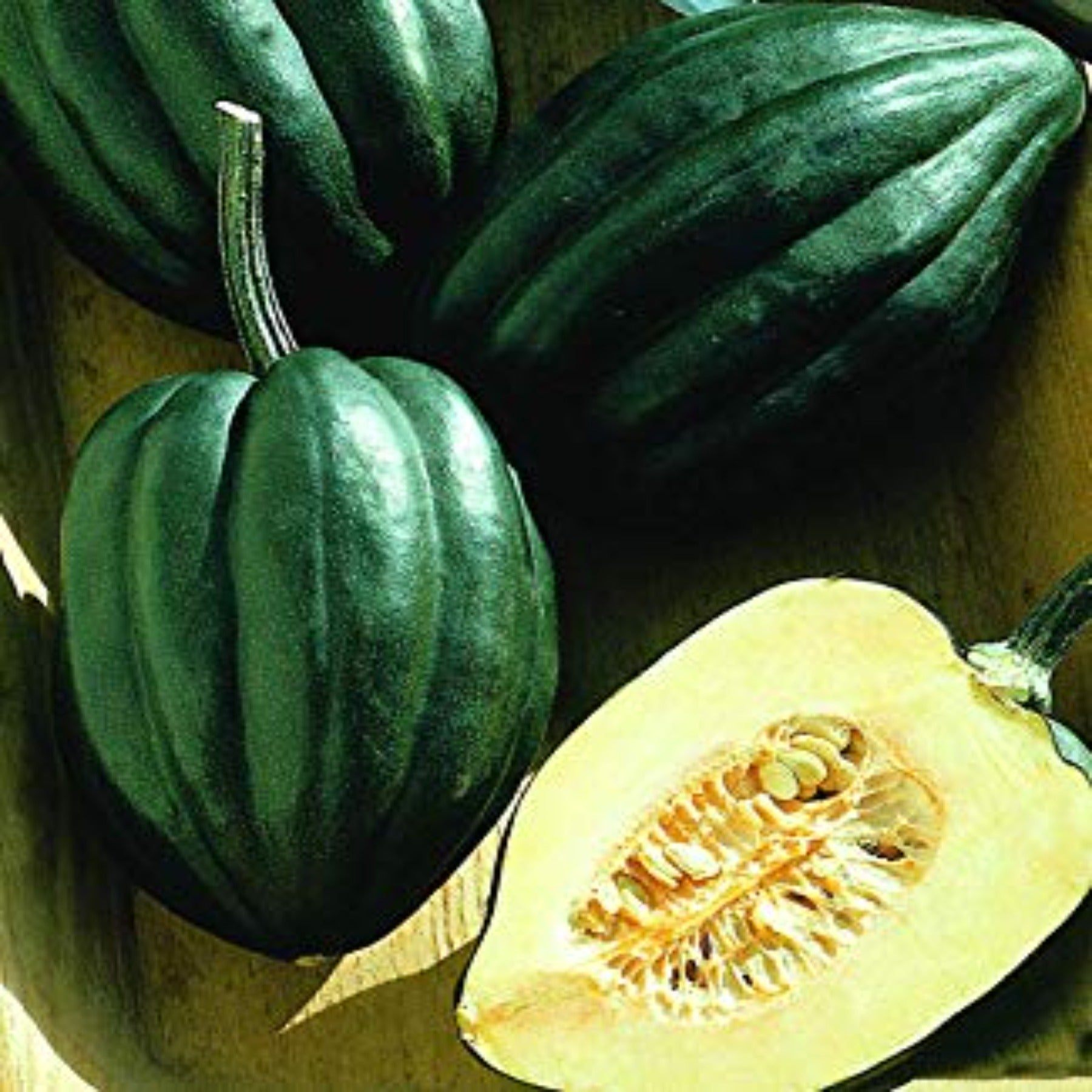 Table King Bush Winter Squash