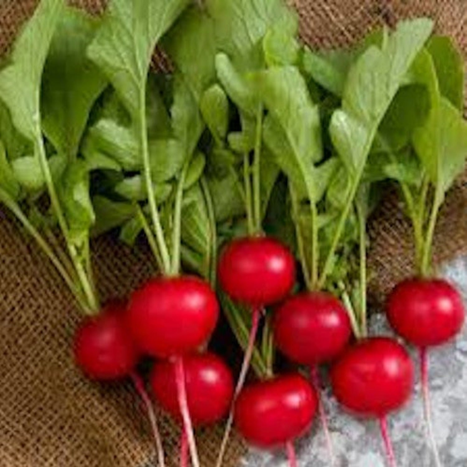 Radish, Cherry Belle Seeds