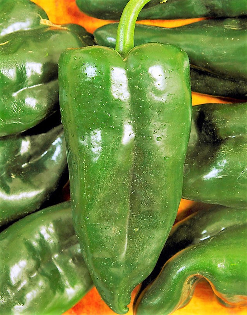 Poblano Mild Hot Pepper Seeds