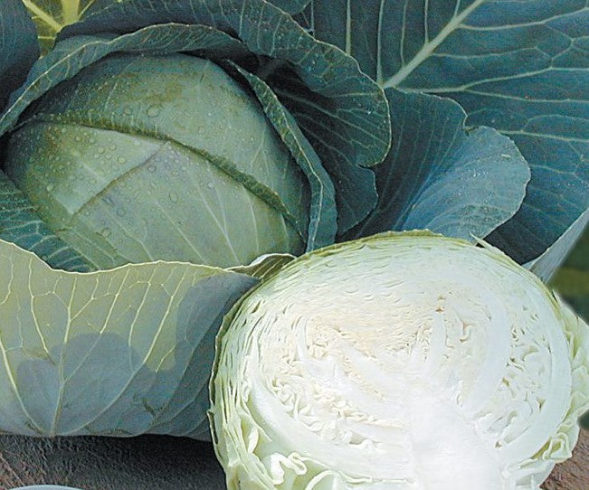 Stone Head Hybrid Cabbage Seeds