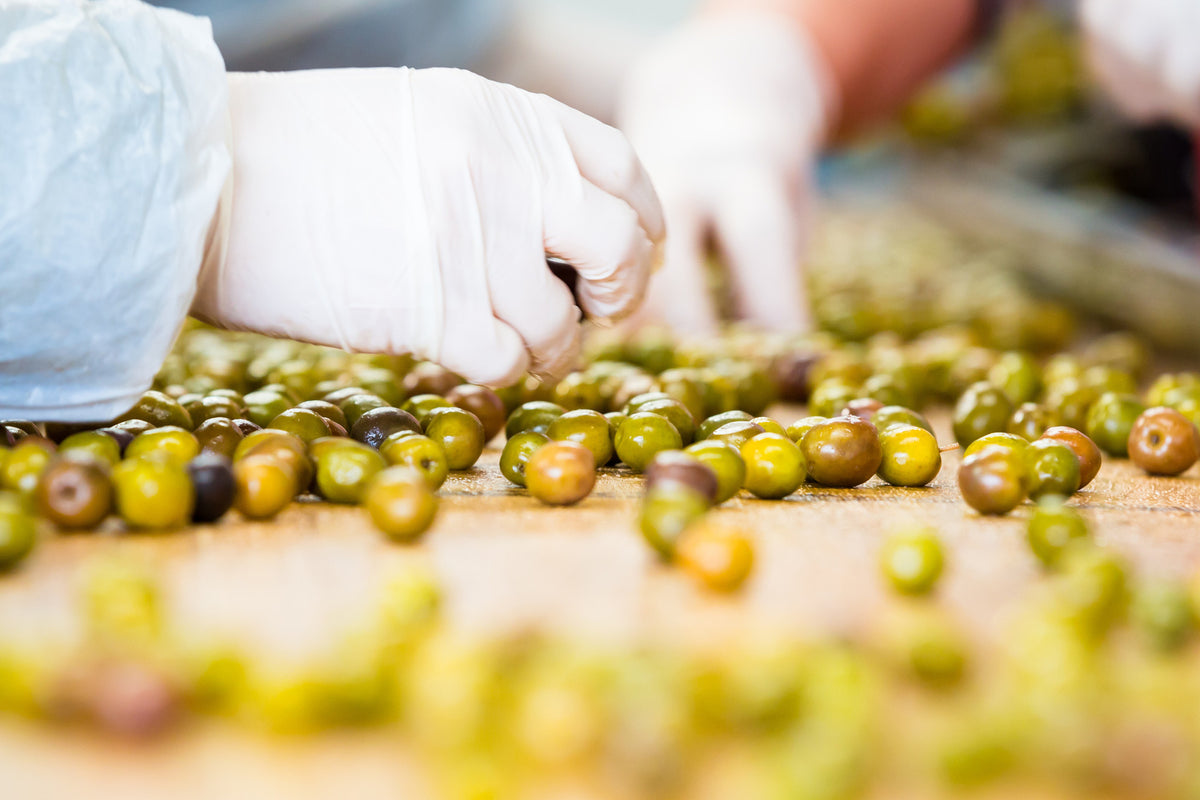 Grading Olives - The next step from tree to table