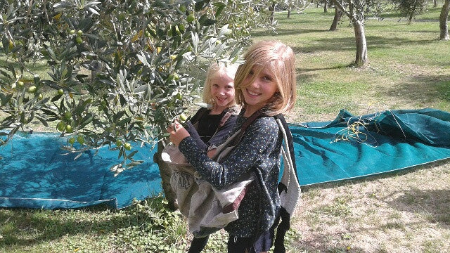Picking Olives...again