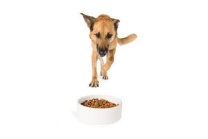 Dr. Bob Goldstein's Wisdom® Dog Food - Turkey Recipe