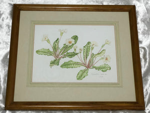 Fine Watercolour Wall Artwork Painting Plant Study Botanical Polyanthus Flowers