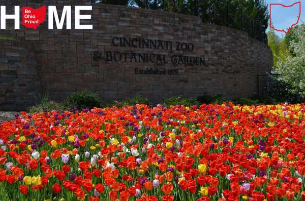 Right Now At The Cincinnati Zoo And Botanical Garden It Is Definitely  Spring! Zoo Blooms Is Going On, Which Means Bright And Colorful Tulips All  Throughout ...