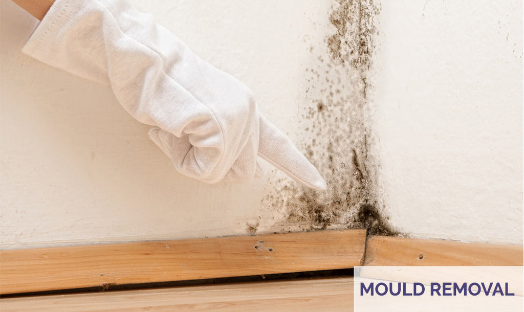 Mould Removal Kits