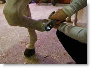 Equine  Laser Cold Therapy KM-20