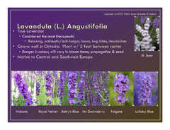 English v  French Lavender What is the Difference?