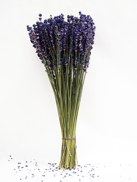 Dried Lavender Stems (Flowers): Royal Velvet (Angustifolia, English)