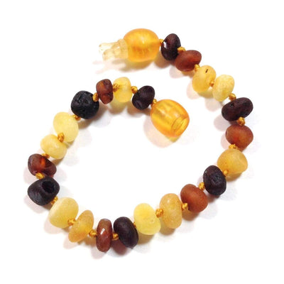 Baltic Amber Multicolored Semi-Polish - 5.5 Bracelet / Anklet - Pop Clasp - Baltic Amber Jewelry
