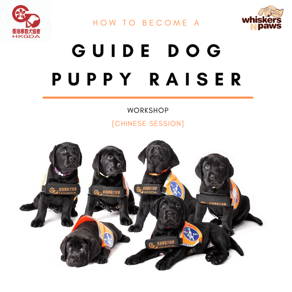 How to Become a Guide Dog Puppy Raiser [Chinese Session]