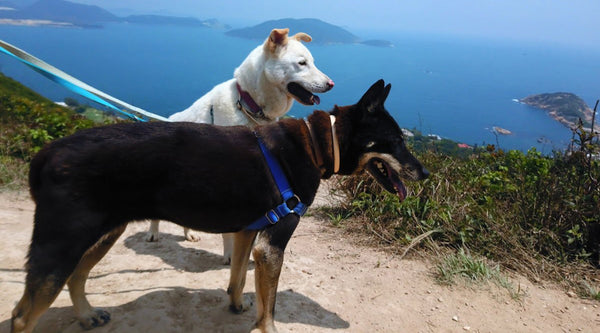 Top 5 hikes in Hong kong to waggle with your dog