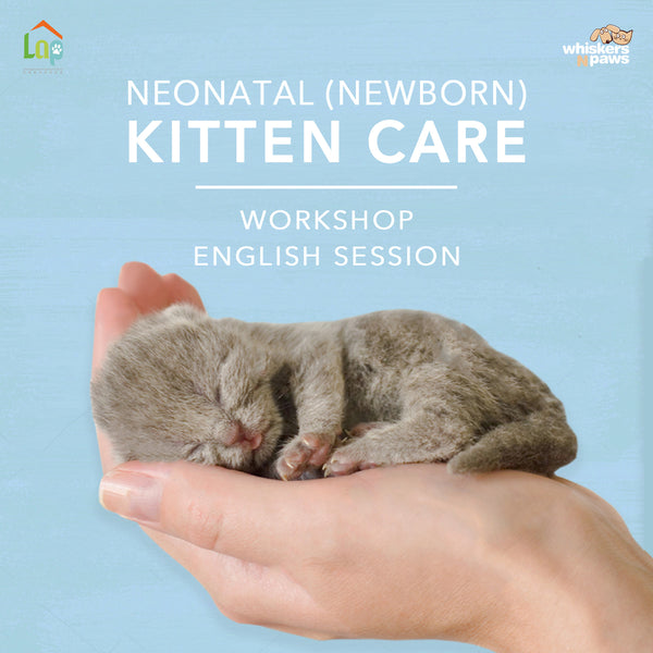 Neonatal (Newborn) Kitten Care Workshop