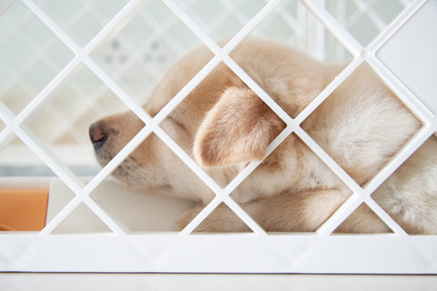 Playpens offer puppies more freedom