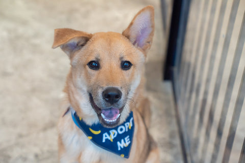 Sidney the puppy with adopt me bandana