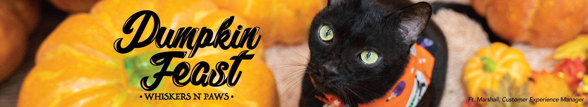 Pumpkin Feast - Cat
