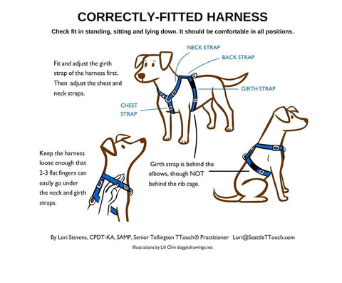 Correctly fitted harness