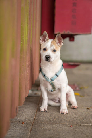 What harness is best for your dog