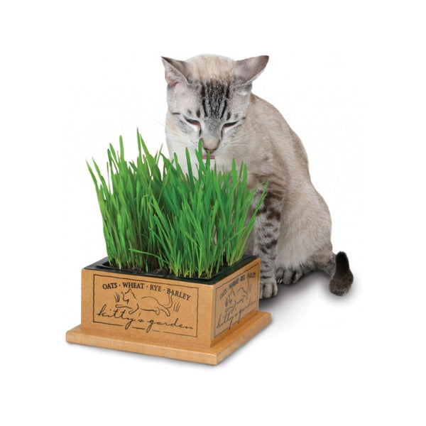 Kitty's Garden Oats, Wheat, Rye & Barley Box Set