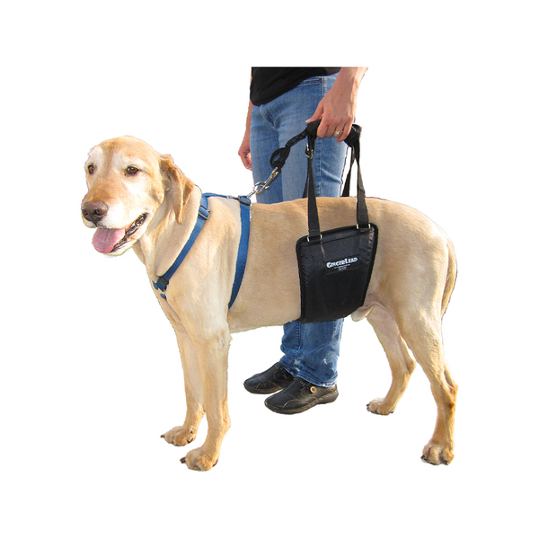 Rehabilitation Harness Medium (Lg Male)