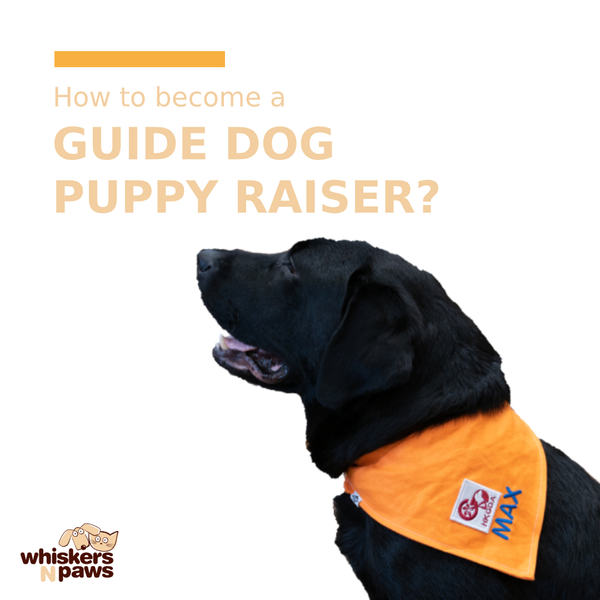 How to Become a Guide Dog Puppy Raiser