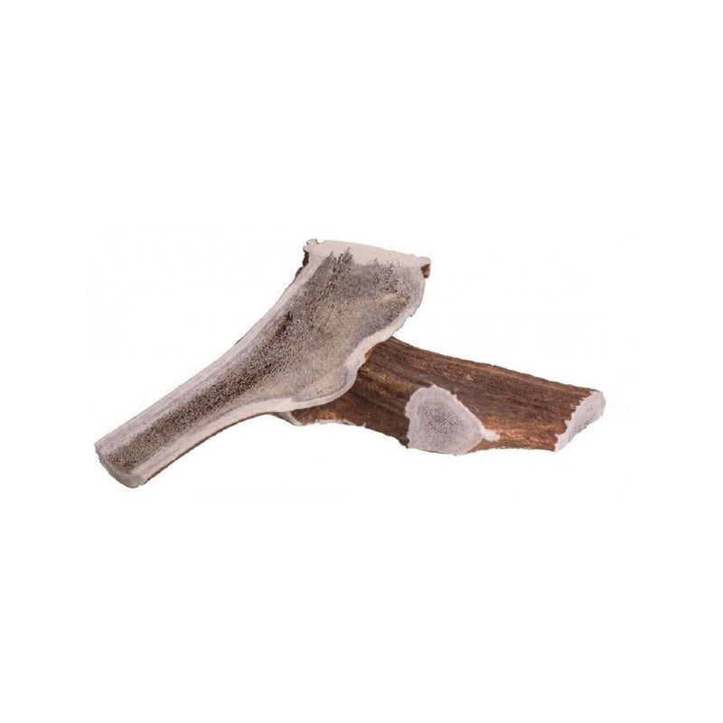Deer Antler, Large
