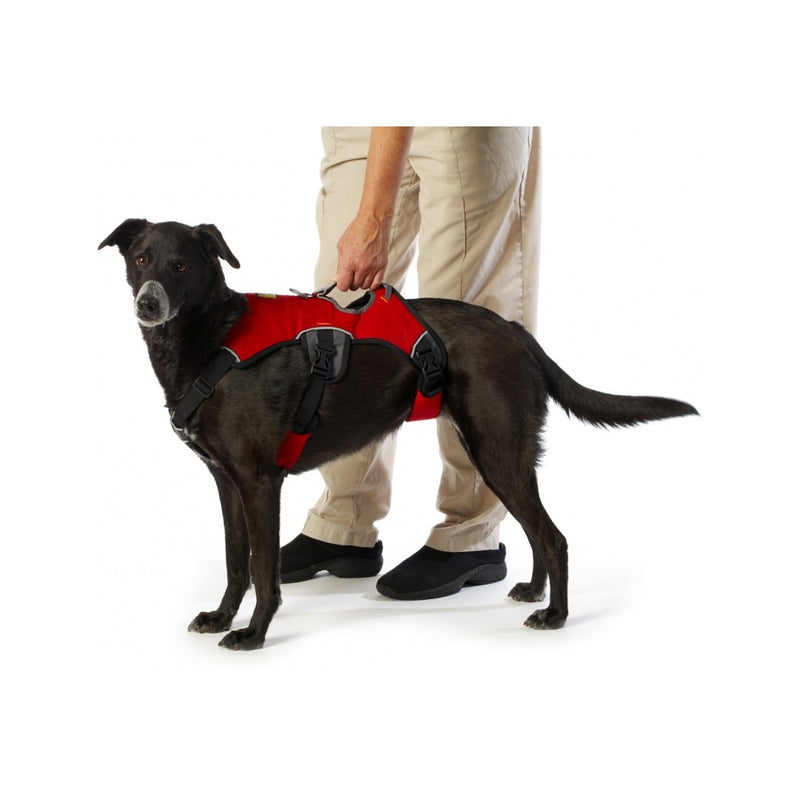 Web Master Harness, Color Red, Medium