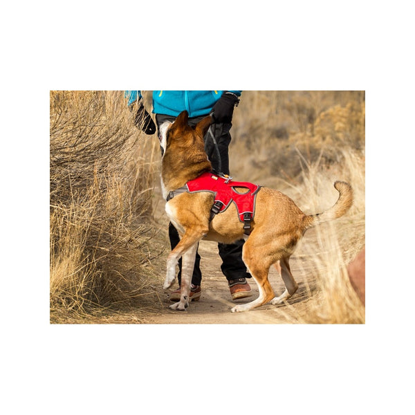 Web Master Harness, Color Red, Large/XLarge