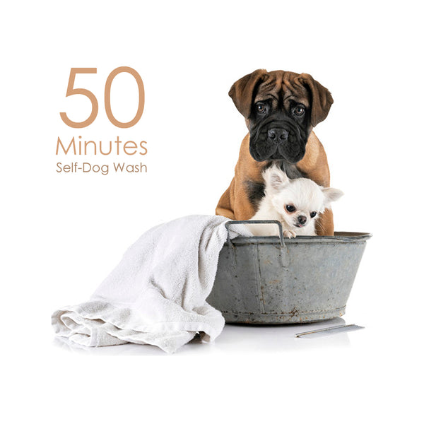 Whiskers N Paws - Self-Dog Wash (50 Minutes)
