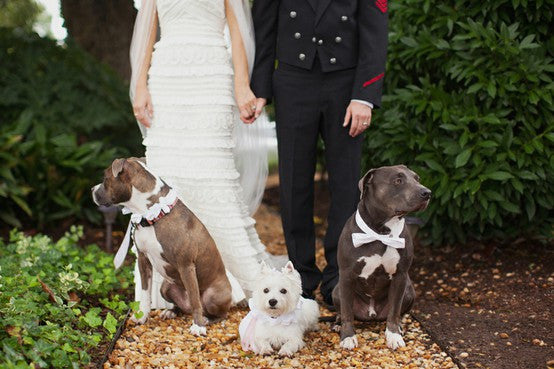 how to use dogs in wedding