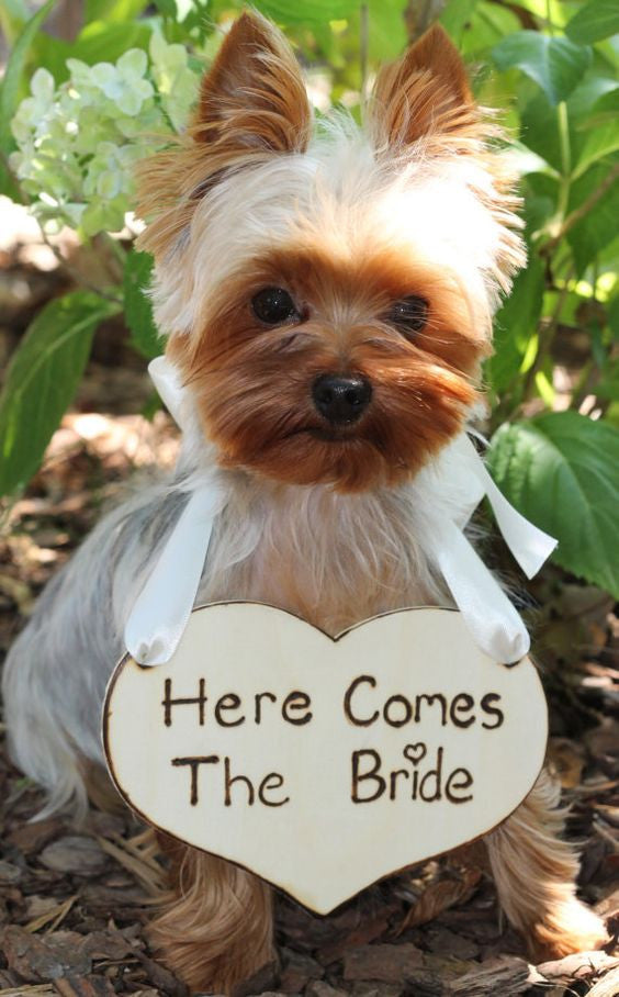 dogs in wedding inspiration ideas