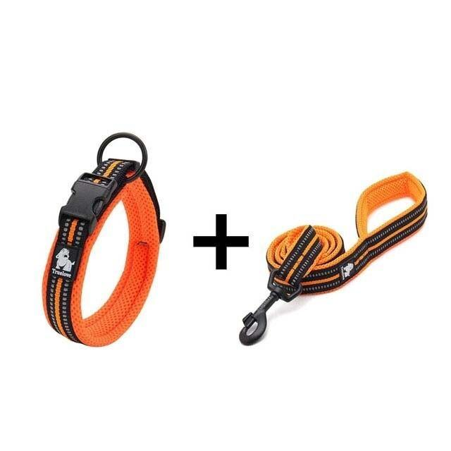 Ultra Visibility Leash & Collar Set