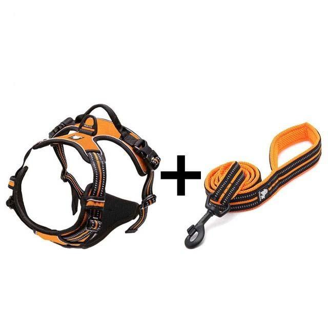 Ultra Visibility Leash & Harness Set