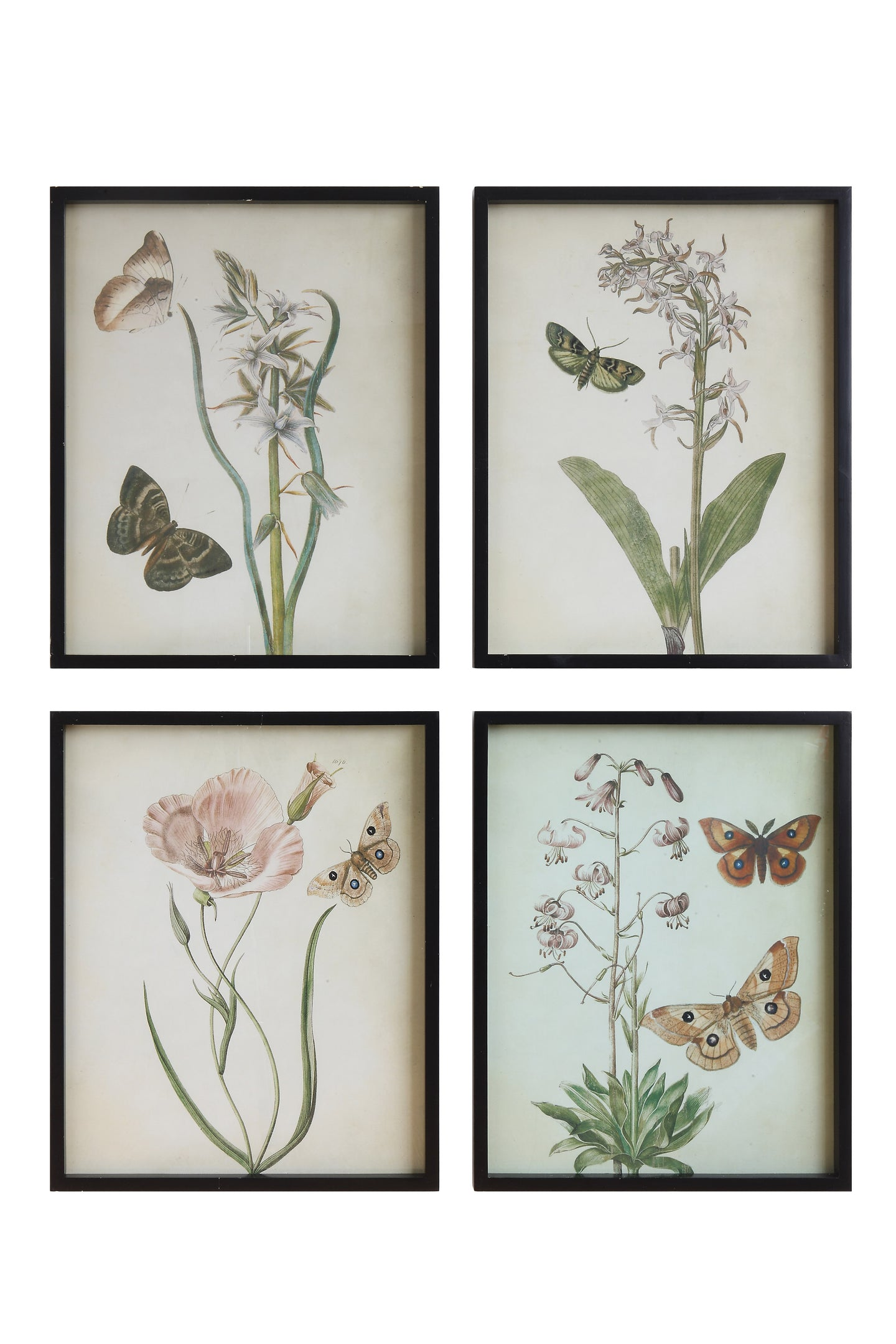 Botanical Wall Art - Free Shipping!