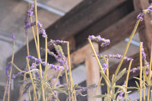 "Load image into Gallery viewer, ""Pop it"" Faux Lavender Plant"