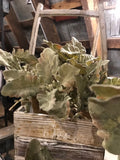 Dusty Miller Faux Plant