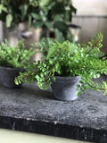 Small Faux Creeping Fern