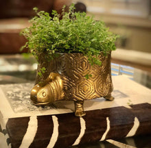 Load image into Gallery viewer, GOLD TOMMIE TURTLE POT