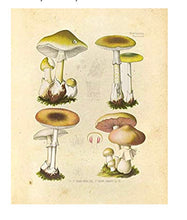 Load image into Gallery viewer, Mushroom Botanical Print 2 in Frameless Glass
