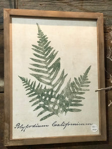 Framed ready to hang Fern Art