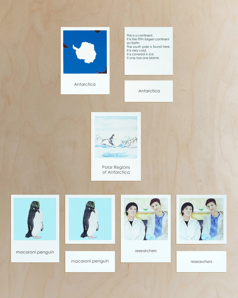 Antarctica Biome Cards-Primary