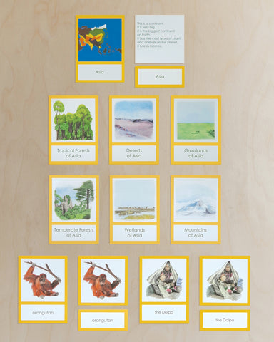 Asia Biome Cards-Primary
