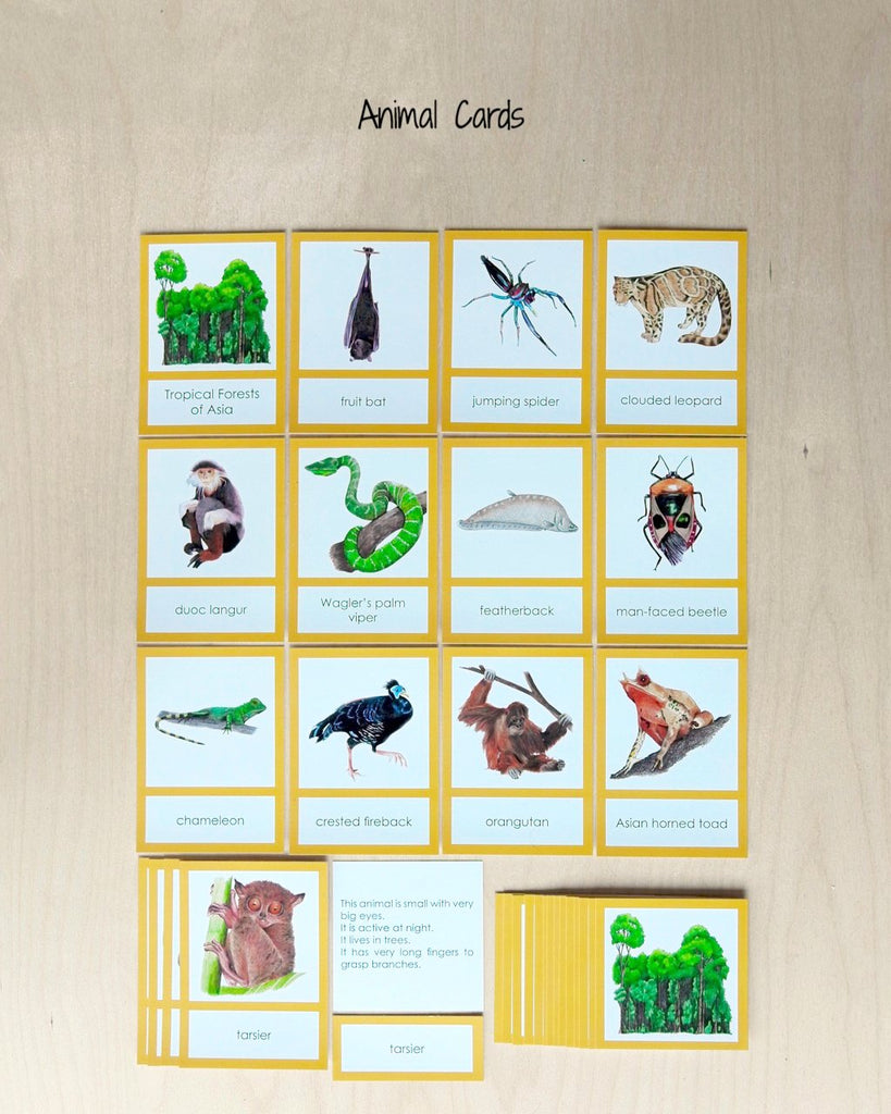 Asia Biome Cards-Primary-animals