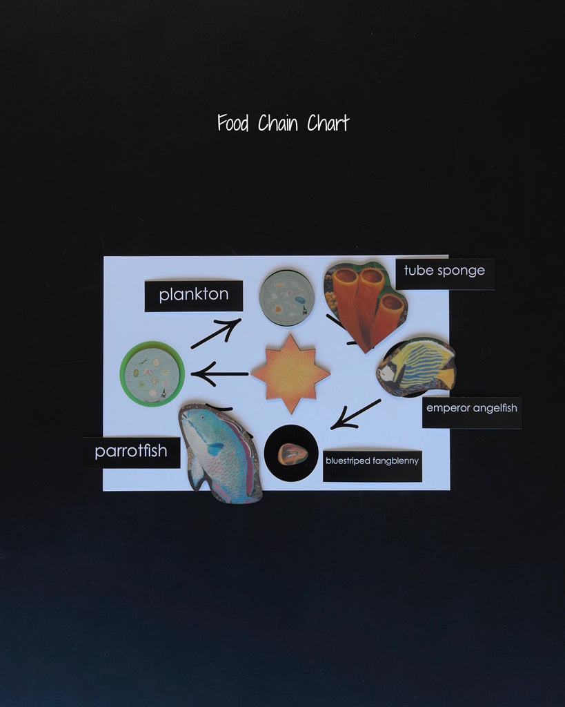 Coral Reef Habitat Mat-food chain